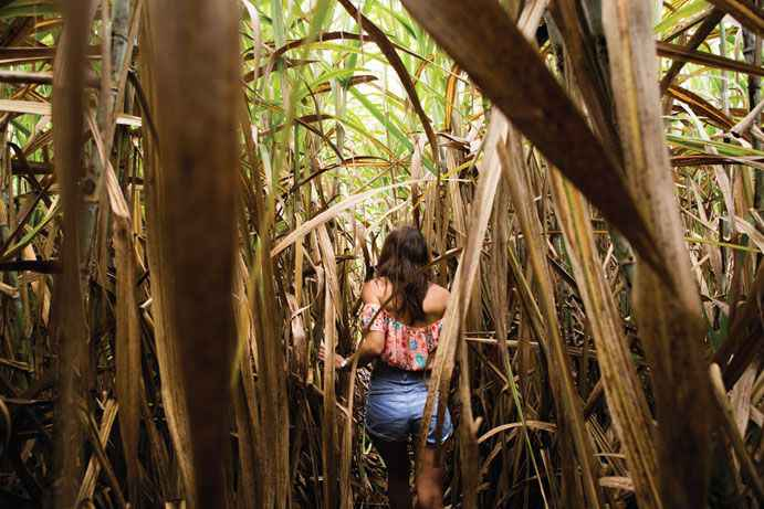 10 (ALMOST) FREE THINGS TO DO IN CAIRNS